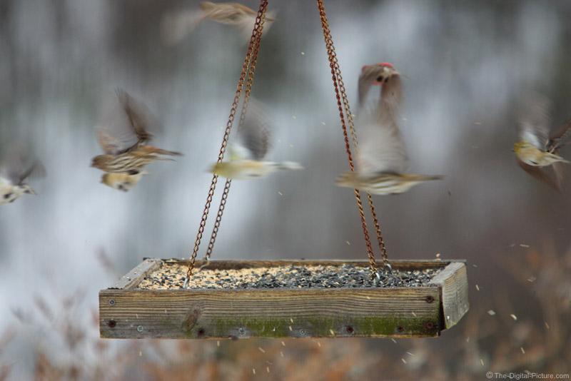 Bird Feeder Picture