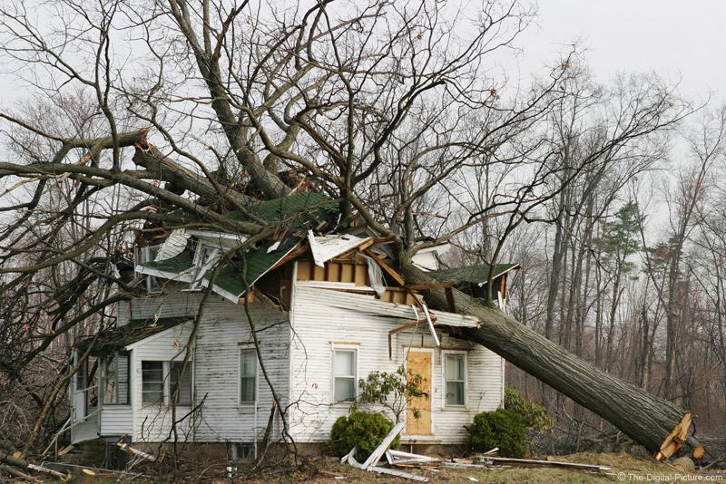 Fallen Tree Picture