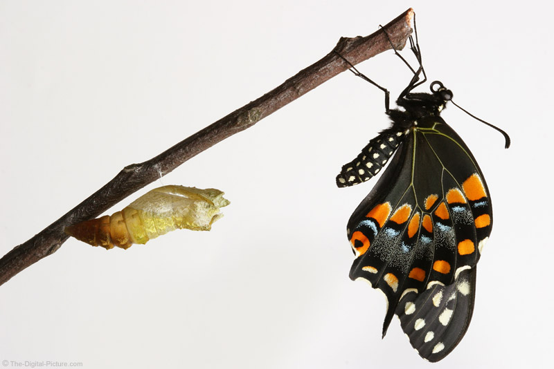 Butterfly Metamorphosis Picture