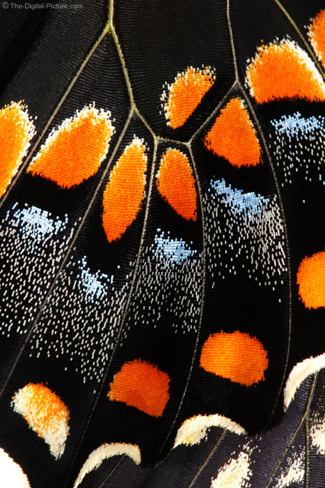 Butterfly Wing Closeup Picture