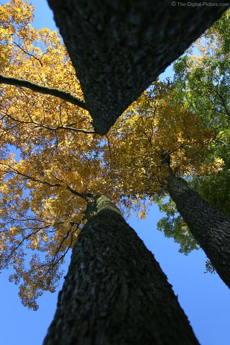 Fall Foliage and Blue Sky 2