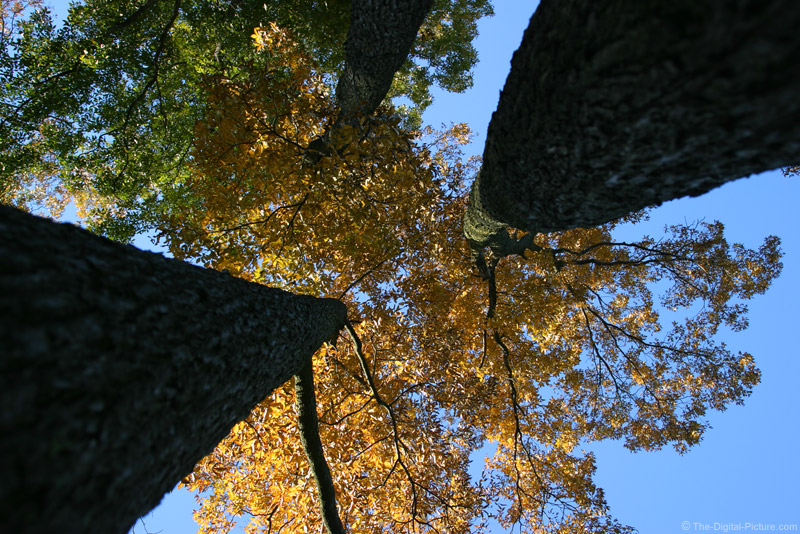 Fall Foliage and Blue Sky Picture