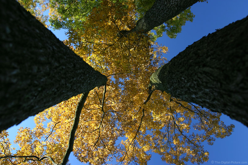 Tree Picture