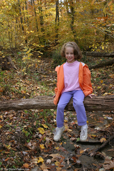 Sitting on Log in Woods Picture
