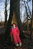 Big Tree Picture