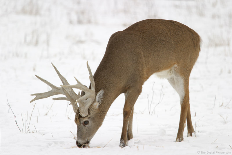Big Buck Picture