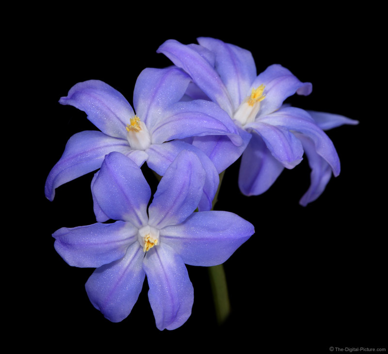 Floating Blue Flowers Picture