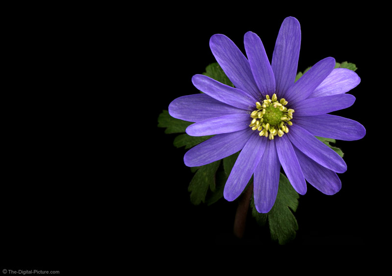 Beautiful Purple Flower Picture