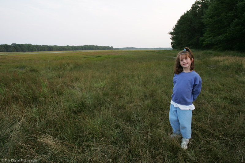 Maine Tidal Marsh Picture