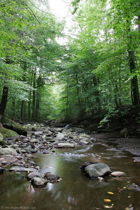 A Stream in the Glen Picture