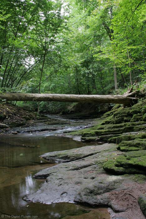 Tree Bridge Picture
