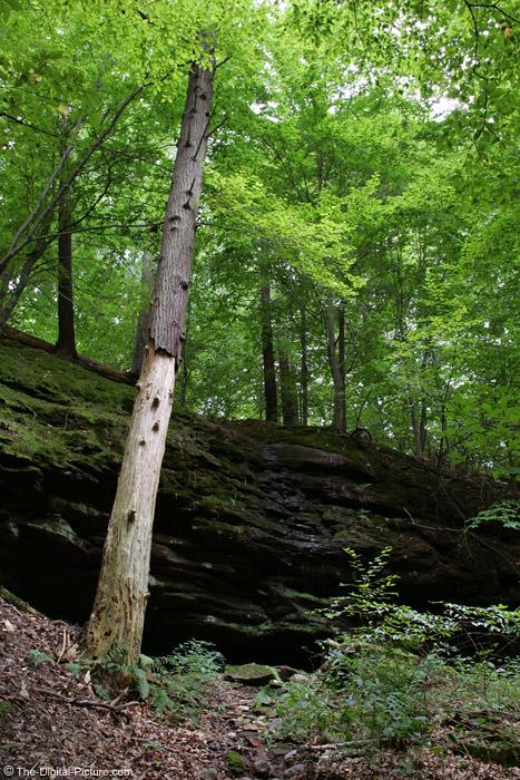 Dead Tree by Rocks Picture