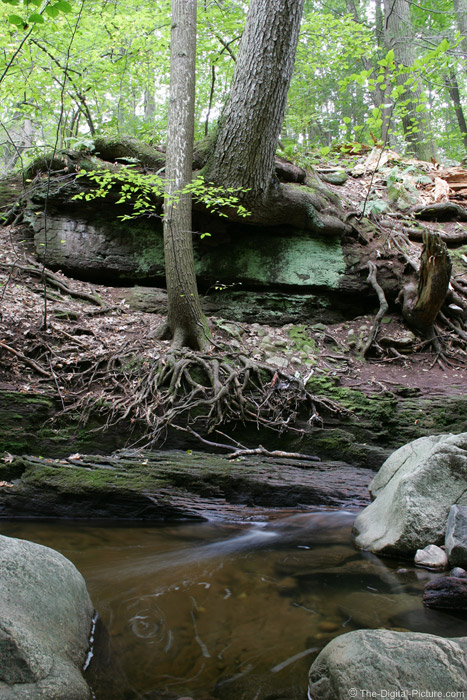 Tree Roots in Rocks Picture