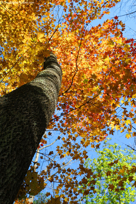 Tree Trunk and Leaves Picture