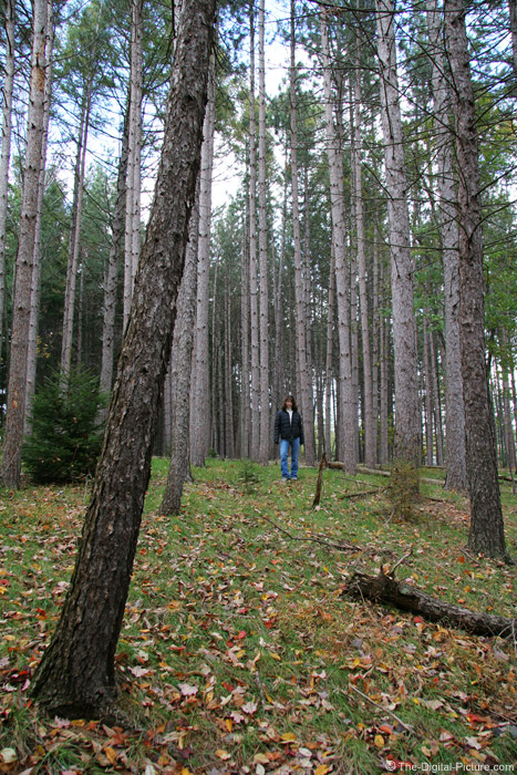 Girl in Pines Picture