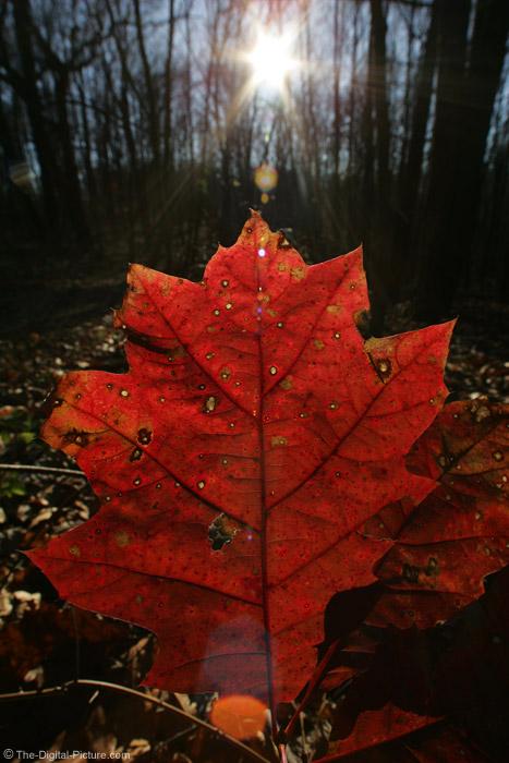 Leaf Closeup Picture