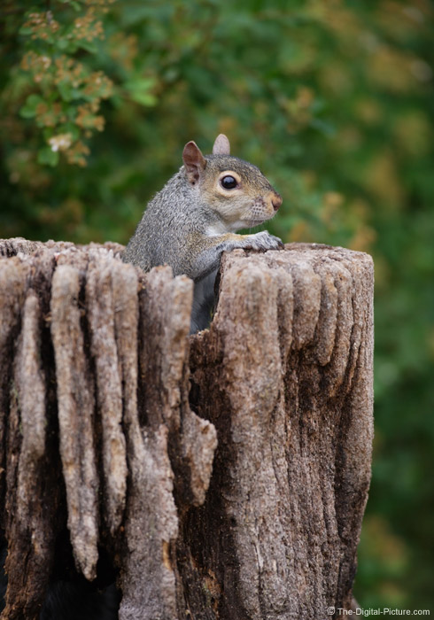 Squirrel on Watch Picture