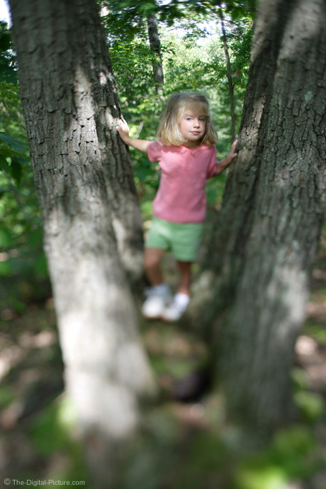 Little Girls in Tree Picture