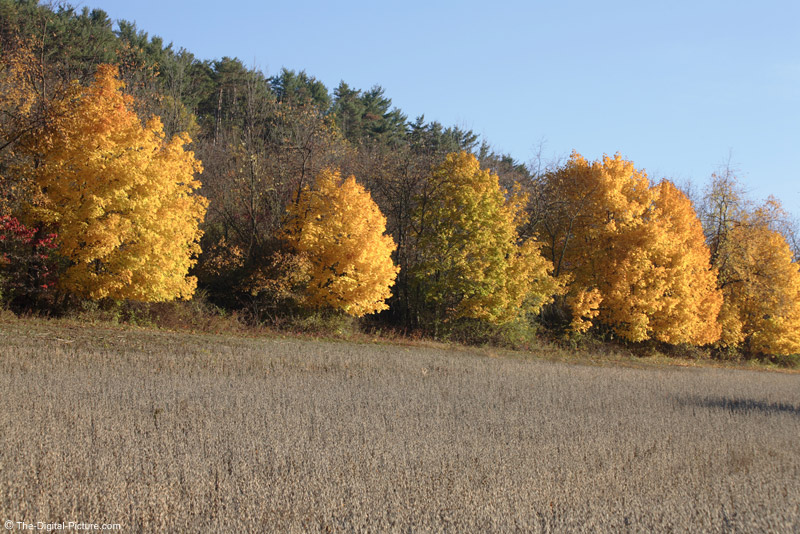 Brightly Colored  Trees Picture (75mm)