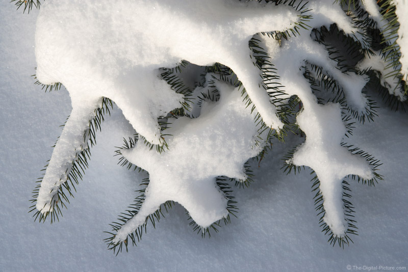Snow-Laden Blue Spruce Tree