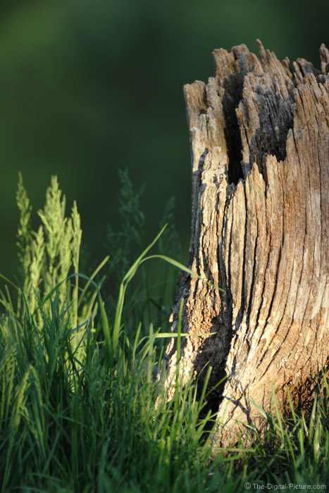 Stump and Grass Picture