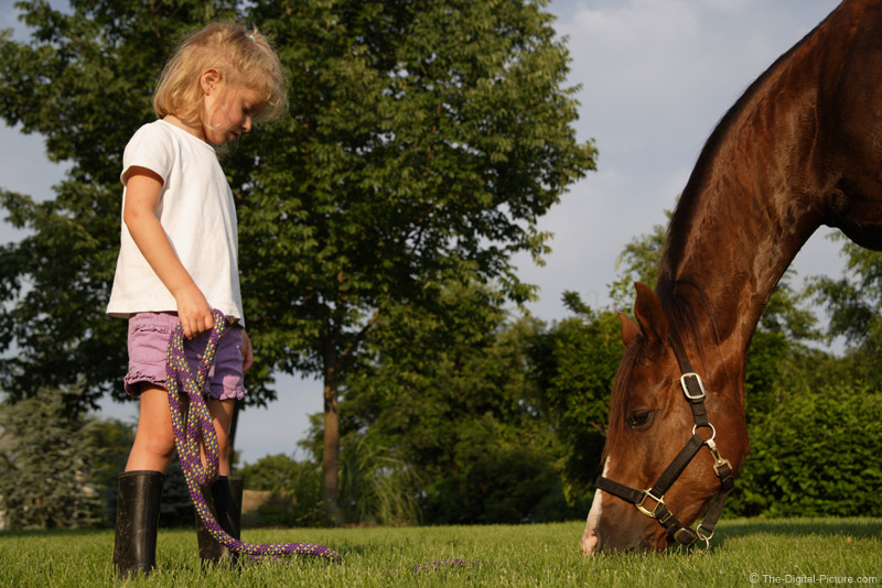 A Girl with Her Horse Picture
