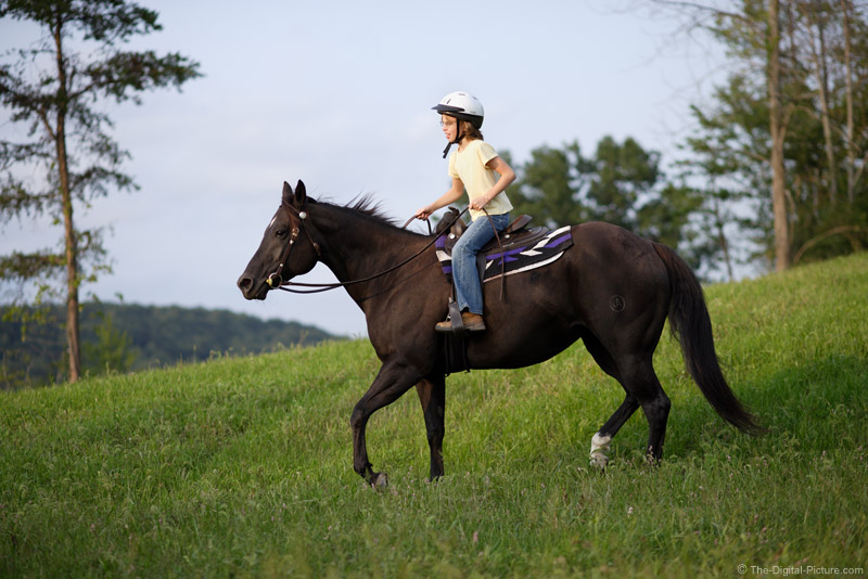 Riding Horse Picture