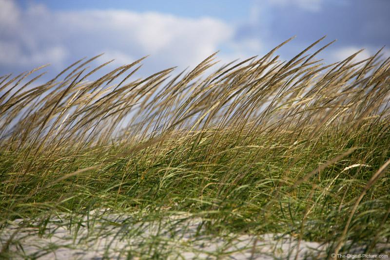 Beach Grass Picture