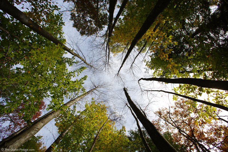 Forest Canopy Picture