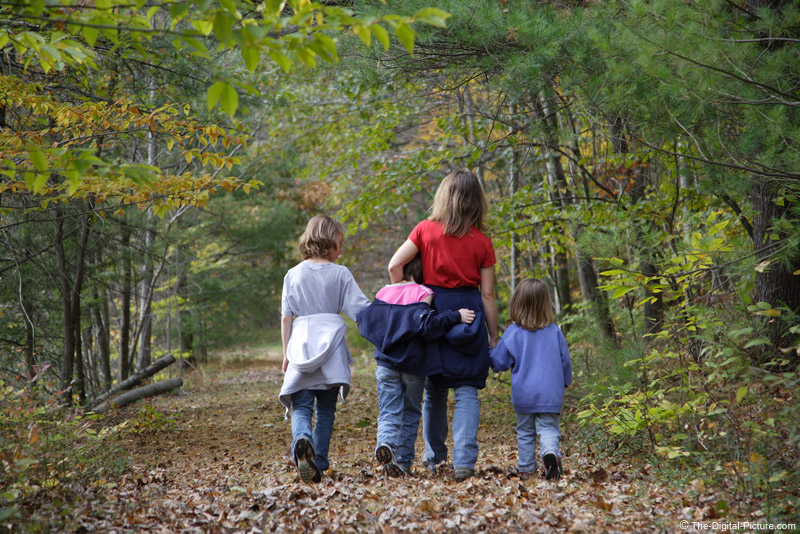 Walking in the Woods Picture