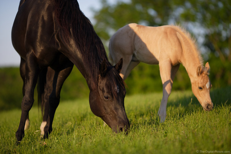 Mare with her Colt Picture