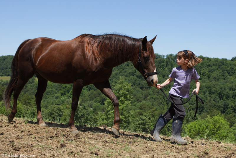 Leading the Horse Picture