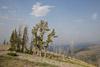 Mount Washburn Area, Yellowstone National Park