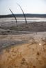 Dead Trees in Hot Spring Runoff