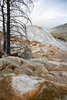 Active Mammoth Hot Springs