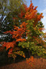 Brilliant Fall Folliage Picture