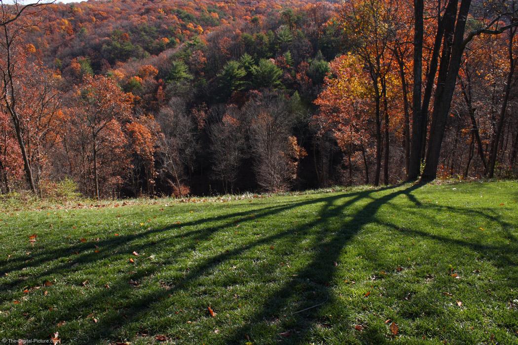 Tree Shadows on Green Grass