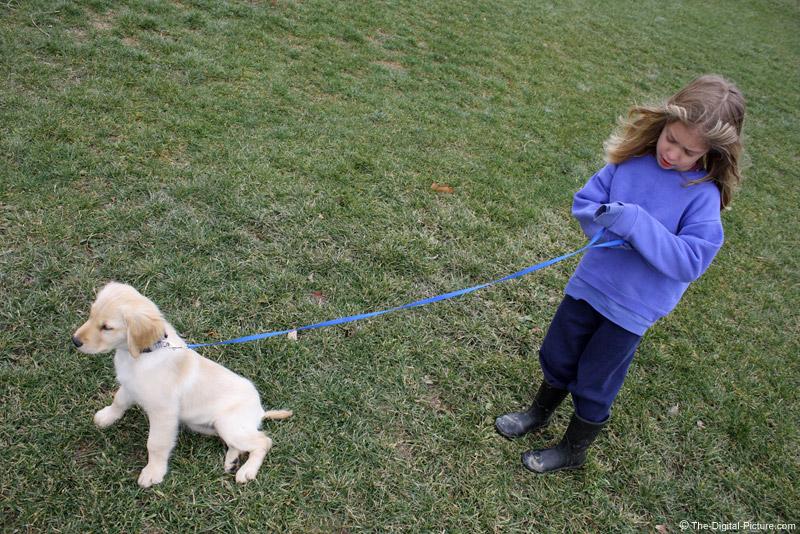 Little Girl and Golden Retriever Puppy