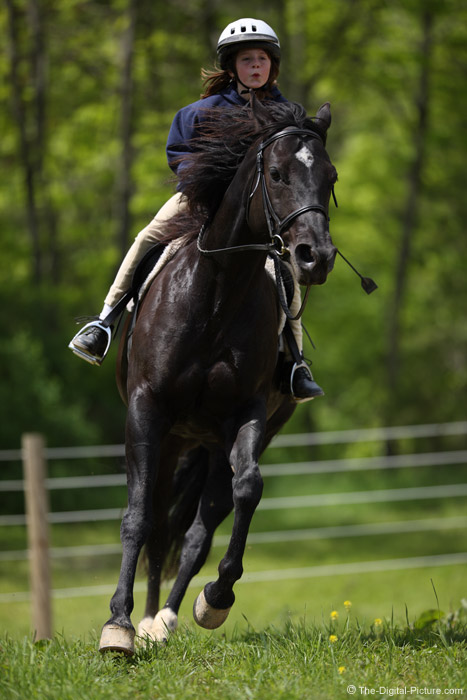 Cantering Black Horse Picture