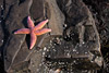 Starfish Picture