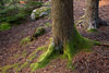 Moss and Trees Picture
