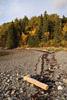 Maine Driftwood