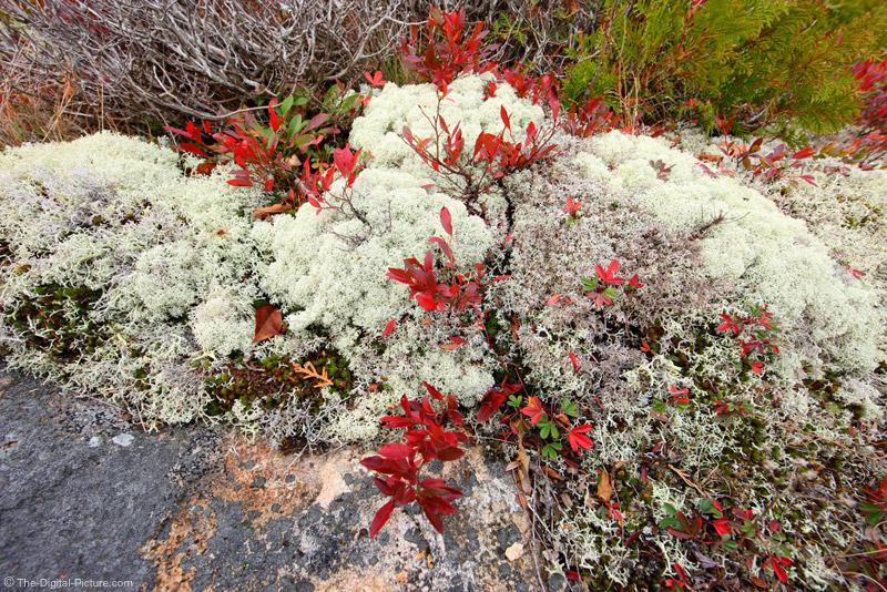 Lichens Picture