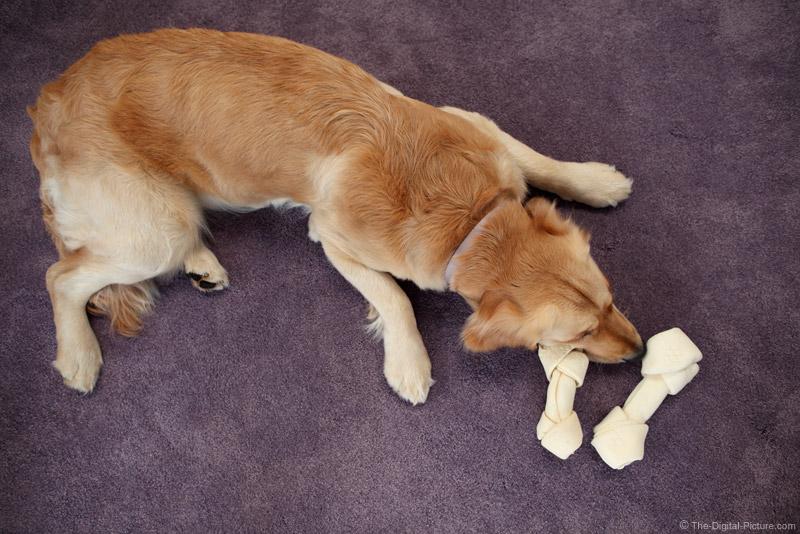 Dog Guarding Bones Picture