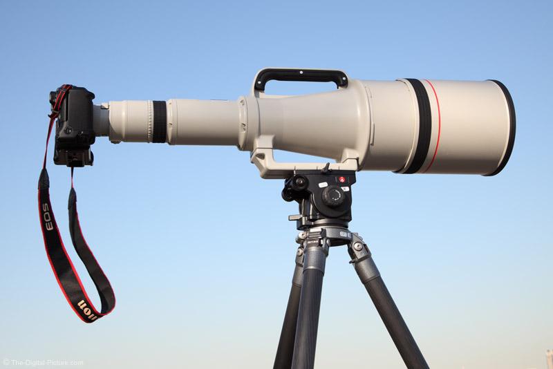 Canon EF 1200mm f/5.6 L USM Lens Full Body Portrait