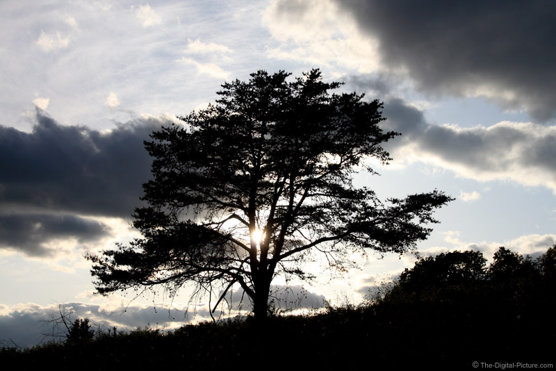 Dark Clouds and Backlit Tree