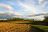 Spring Fields under Sweet Light