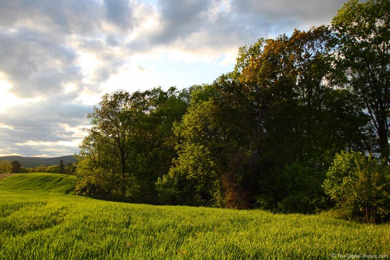 Spring Grain Field