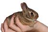 Baby Rabbit Picture