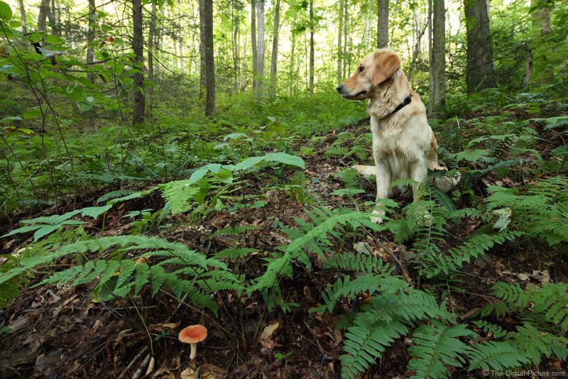 Dog, Ferns and a Mushroom